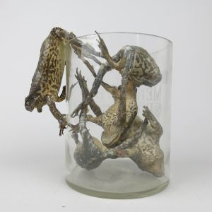 Jar of five toads (antique)