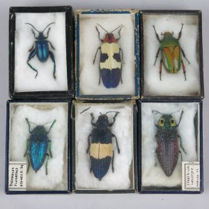 Boxed beetles