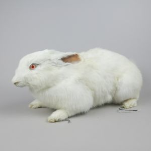 Albino Rabbit 1