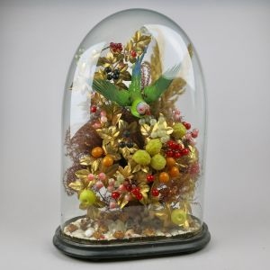 Glass dome display with parakeet