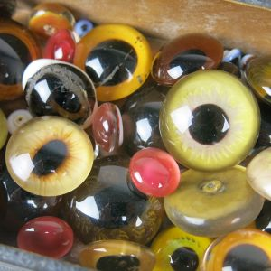 Glass eyes (taxidermy)