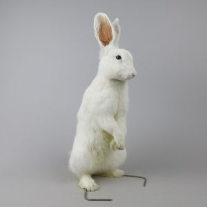 White Rabbit 1