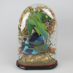 Glass Dome of tropical birds 4