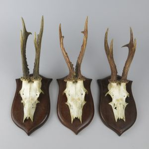 Roe deer horns on shields x 3