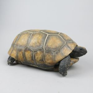 Tortoise, Yellow-footed
