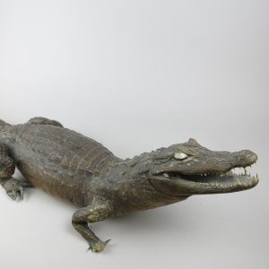Crocodile, large no.2