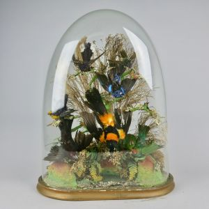 Glass dome of tropical birds 2