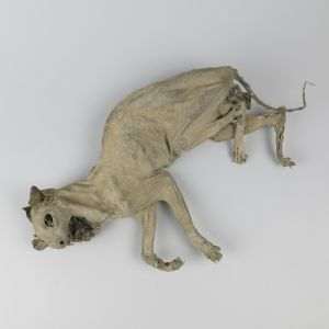 Mummified Cat 1