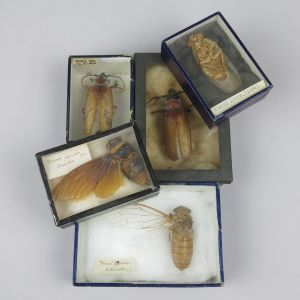 Boxed insects