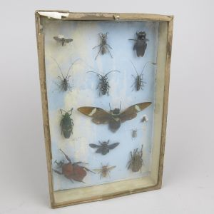 Cased Beetles