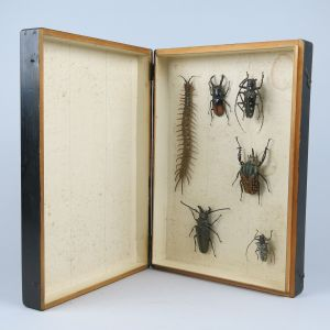 Cased beetles/insects
