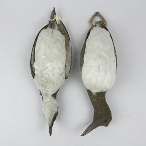 Guillemot & Razorbill (as 'dead')