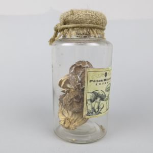 Poison mushrooms in jar