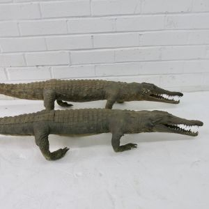 Pair of Crocodiles