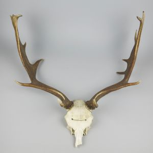 Antlers (no.6)