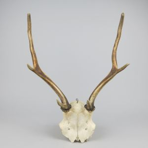 Antlers (no.12)