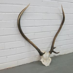 Antlers (no.16)