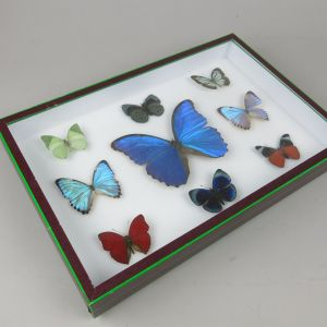 Mixed butterfly case