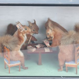 Squirrels playing cards