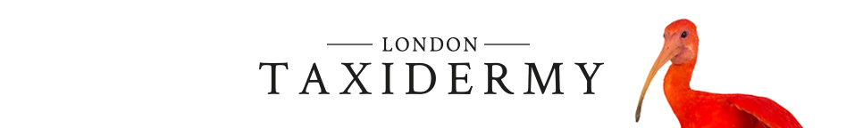 London Taxidermy Logo